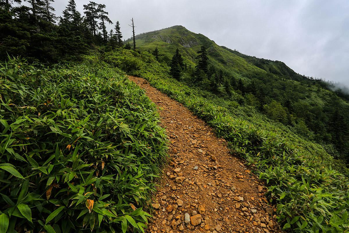 【岩菅山 聖平の上】登山百景-木が減った
