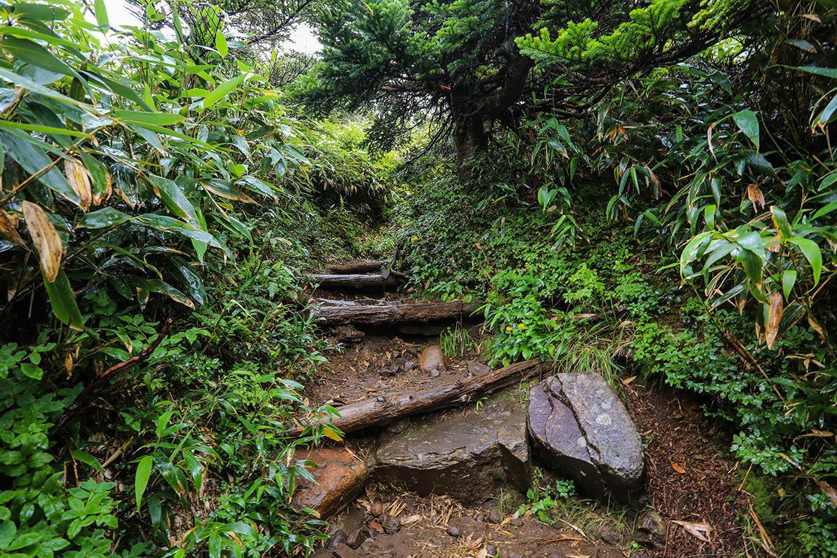 【岩菅山 聖平の上】登山百景-山頂下に緑がいっぱい