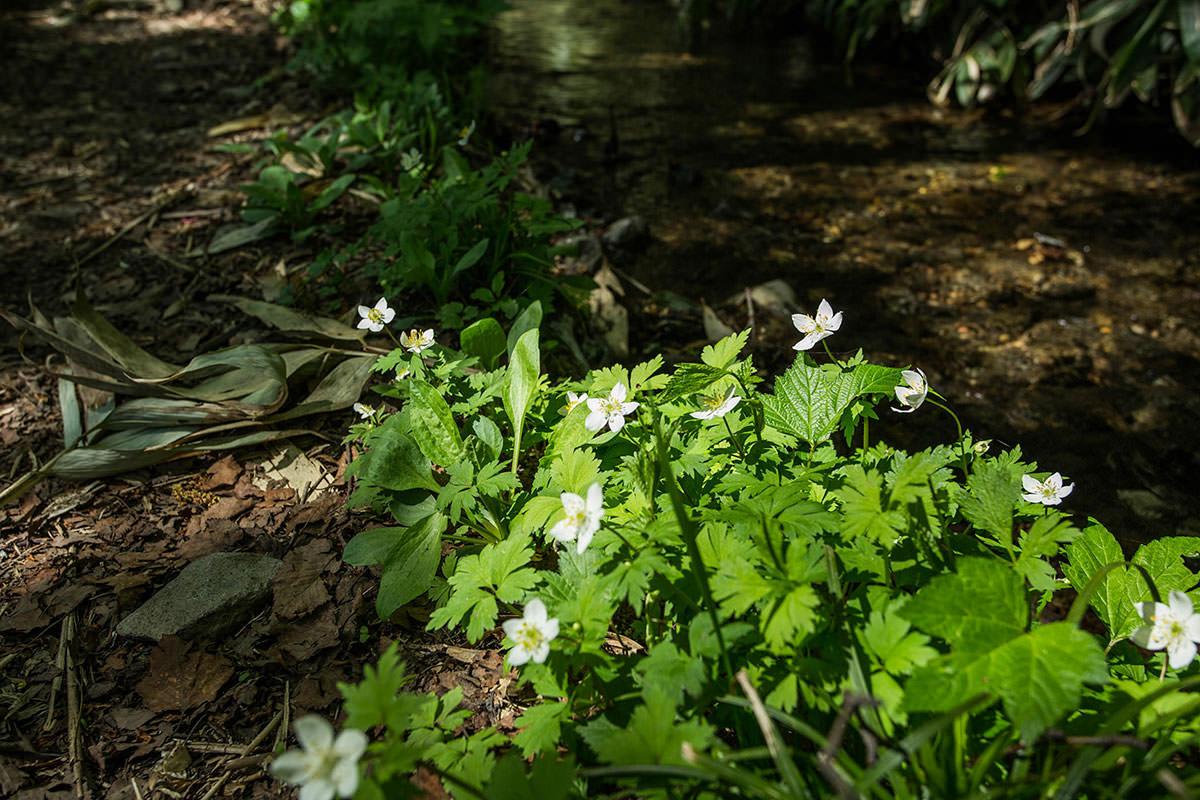 【岩菅山 裏岩菅山縦走】登山百景-白い花も少し