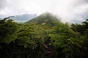 西篭ノ塔山はカッコが良いのだけど、とりあえず葉っぱが凄い