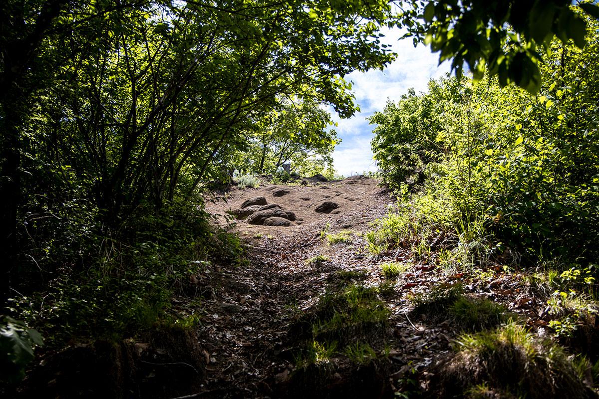 木のトンネルを抜けると山頂
