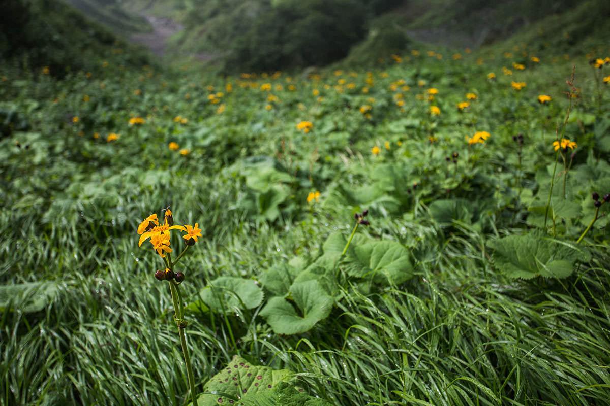 【上河内岳】登山百景-下には花