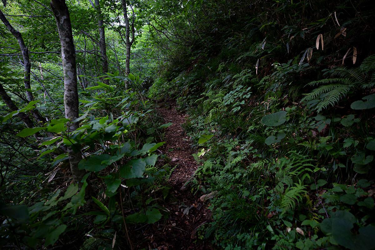 左に岩壁と沢を見ながら平坦な登山道が続く
