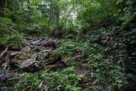 左の沢沿いに登山道が続く