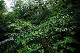 登山道にハミ出してくる葉っぱも多い