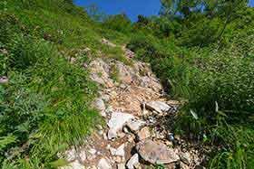 笹が減ったら岩の急登