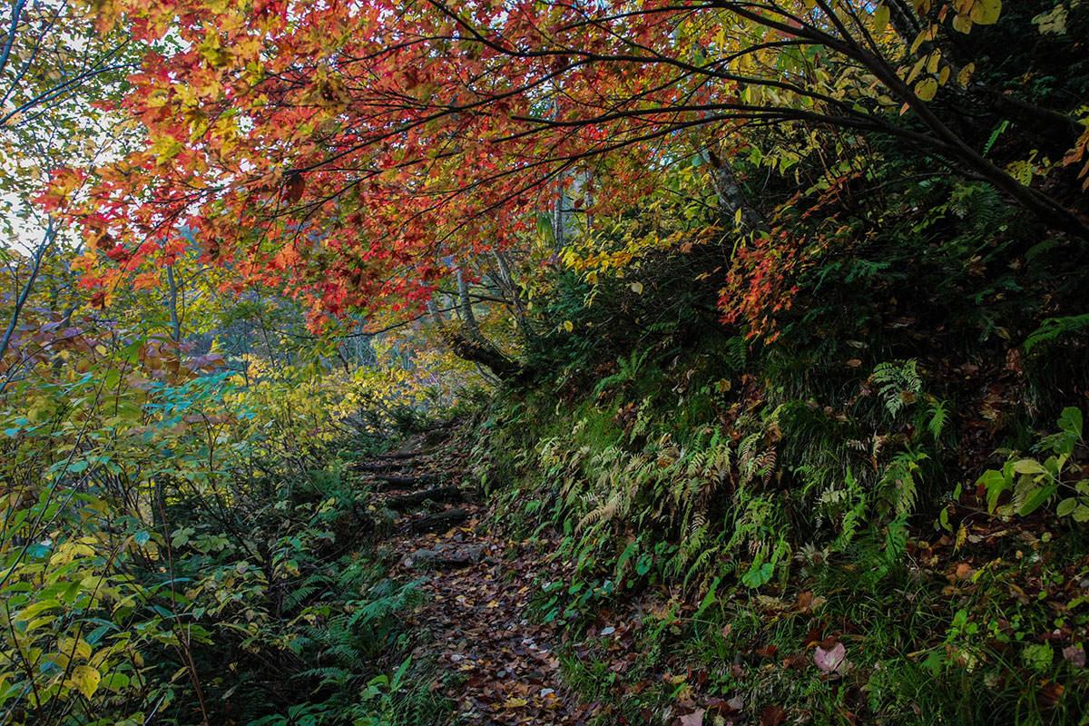 【鹿島槍ヶ岳】登山百景-紅葉がちょうど良い