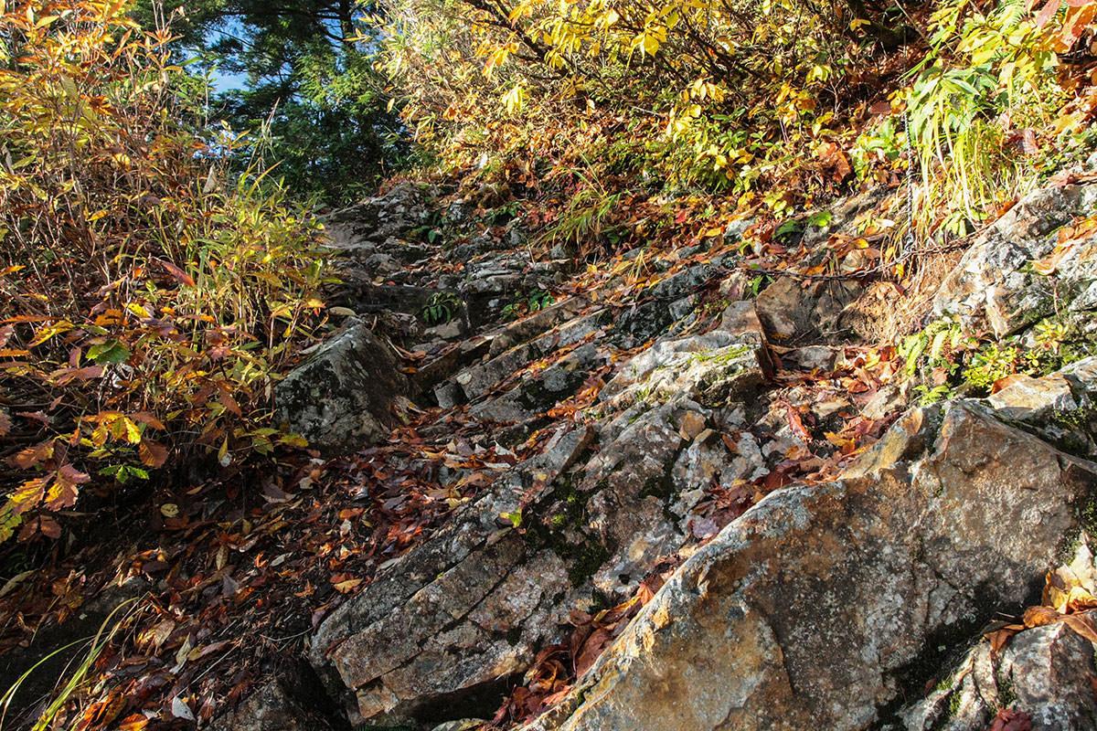 【鹿島槍ヶ岳】登山百景-濡れた木の葉と石が滑る