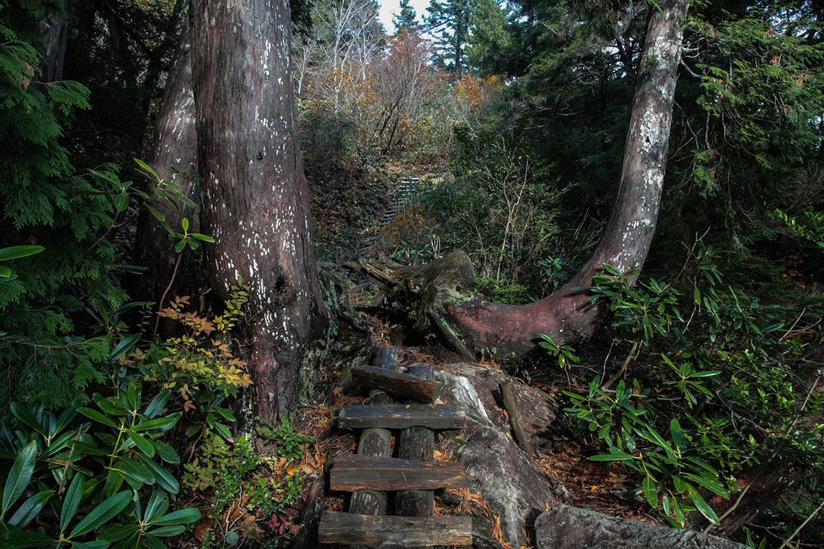 【鹿島槍ヶ岳】登山百景-ハシゴが多い