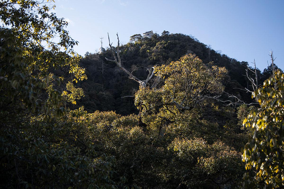 岐阜城が見える