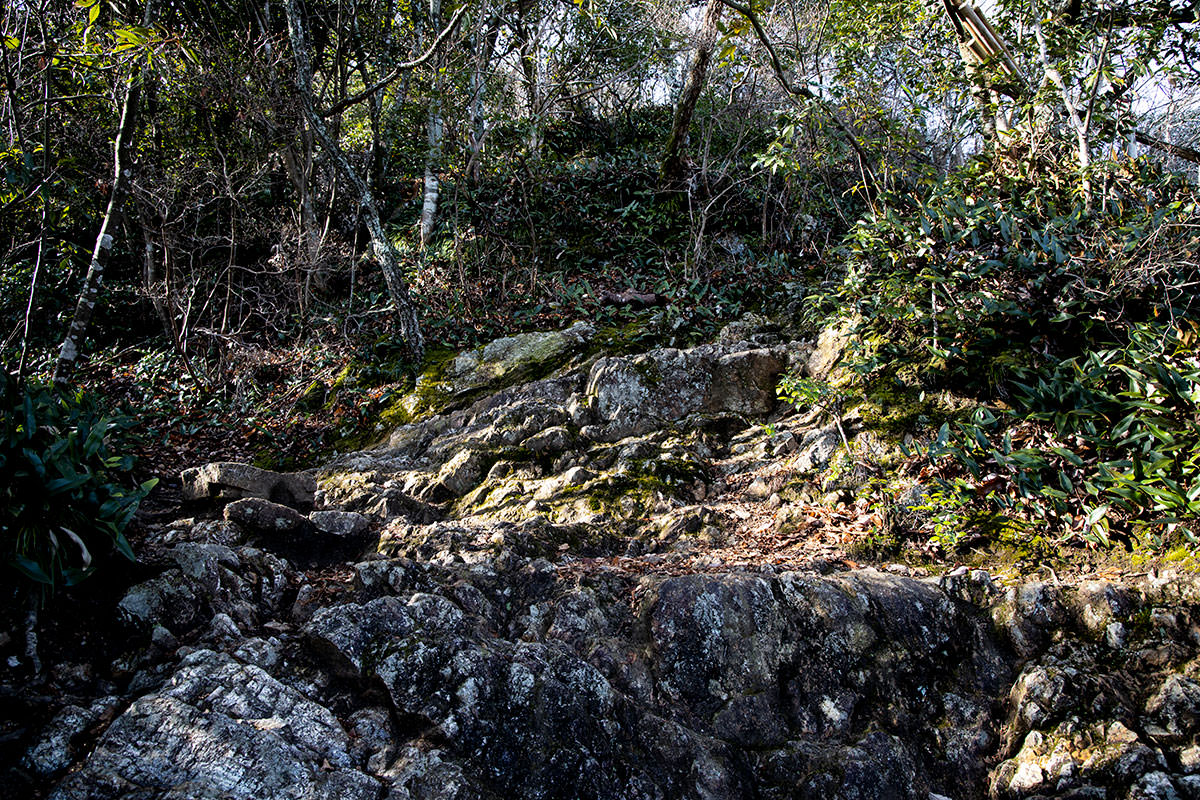 金華山-石は多め