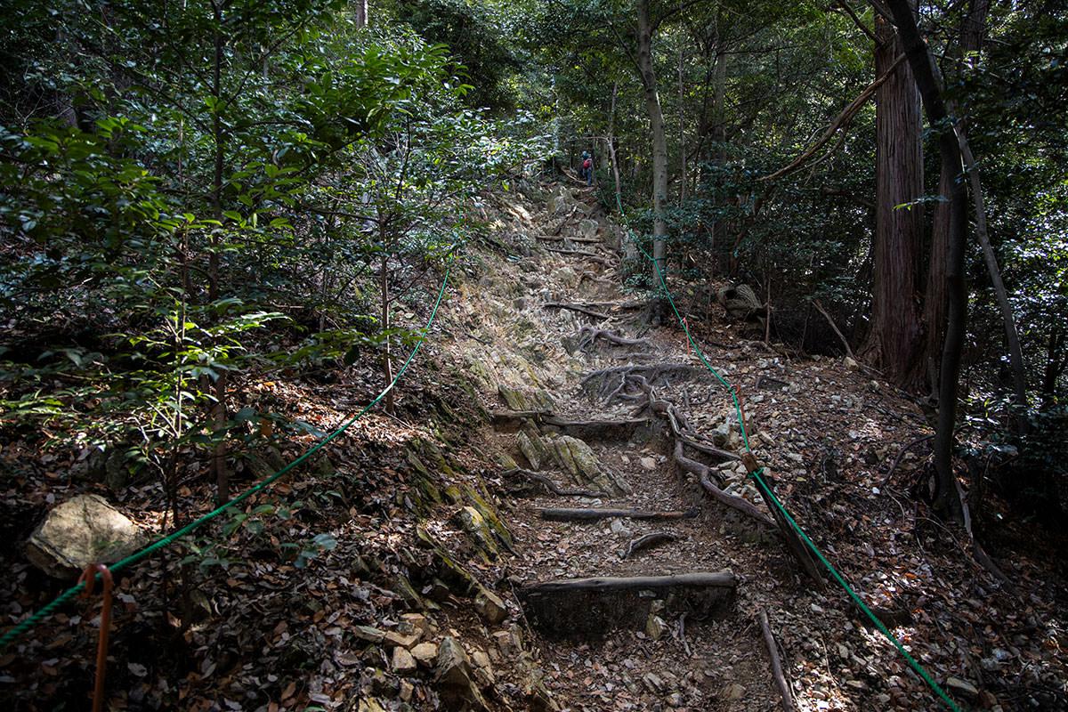 金華山-根っ子なんだか階段なんだか。。。