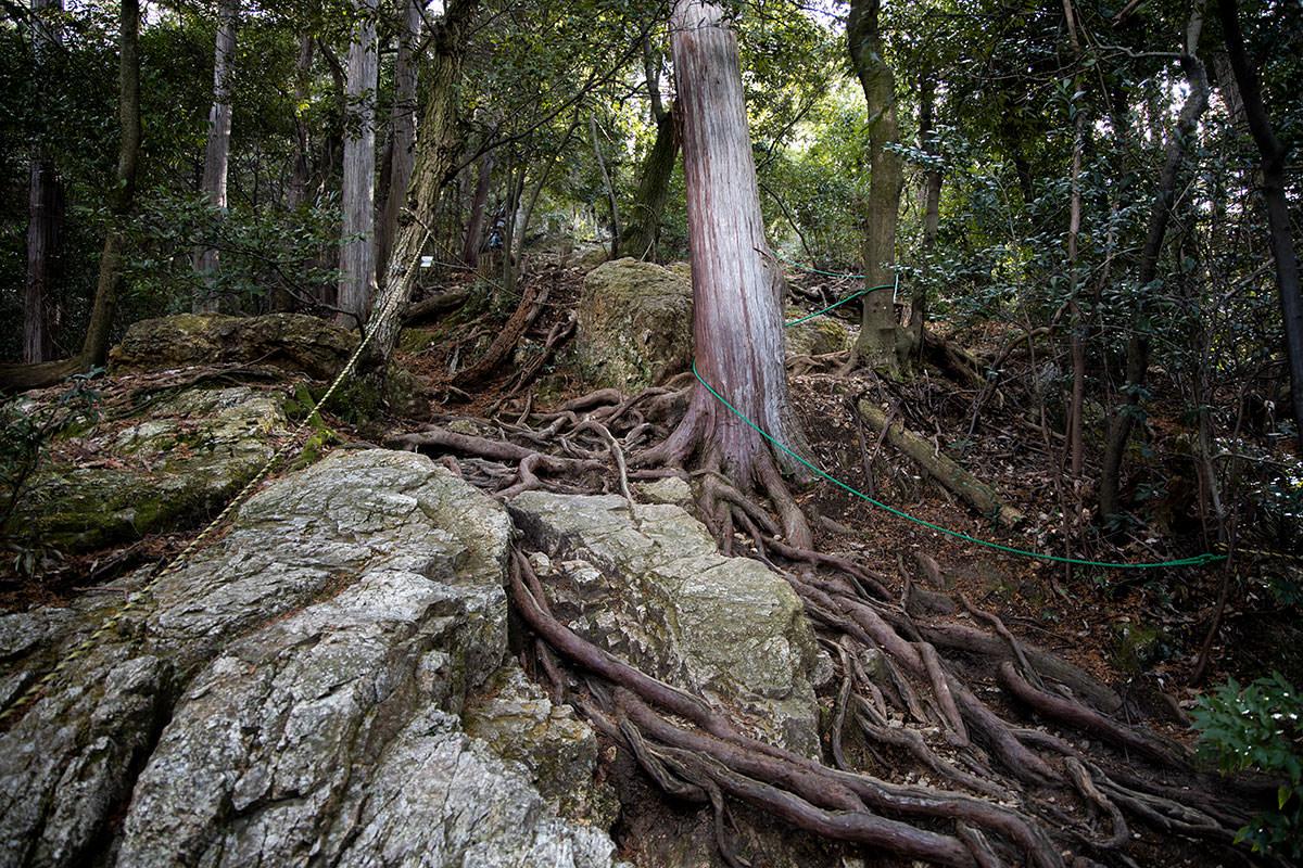 金華山-木の根がいっぱい