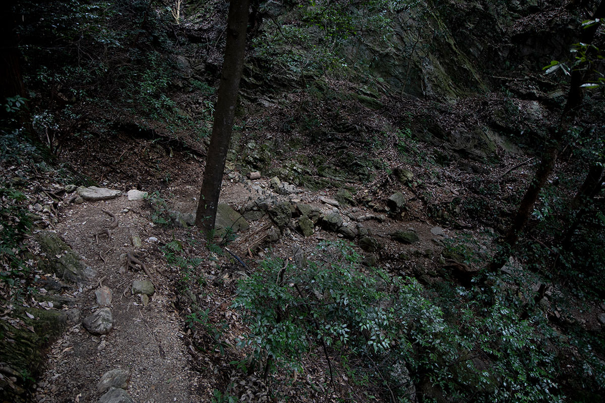 金華山-森の中を歩く感じ