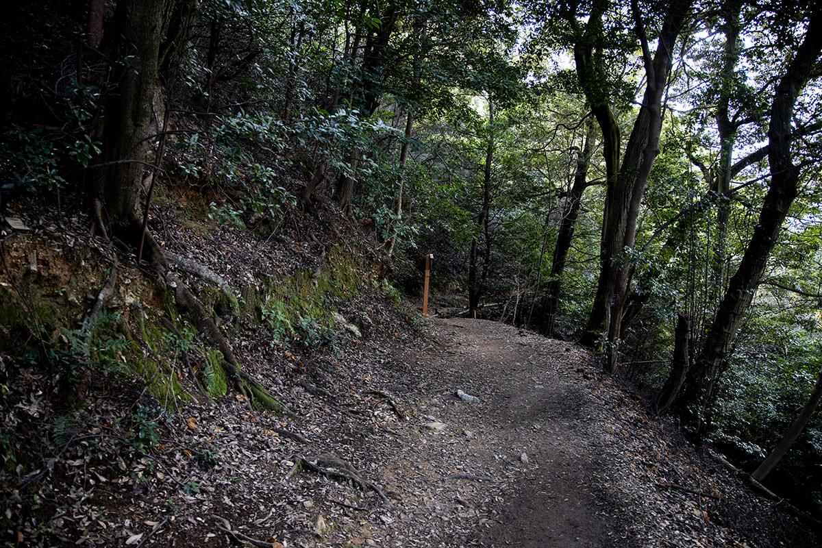 金華山-右は崖だけれど歩きやすいくらいになだらか