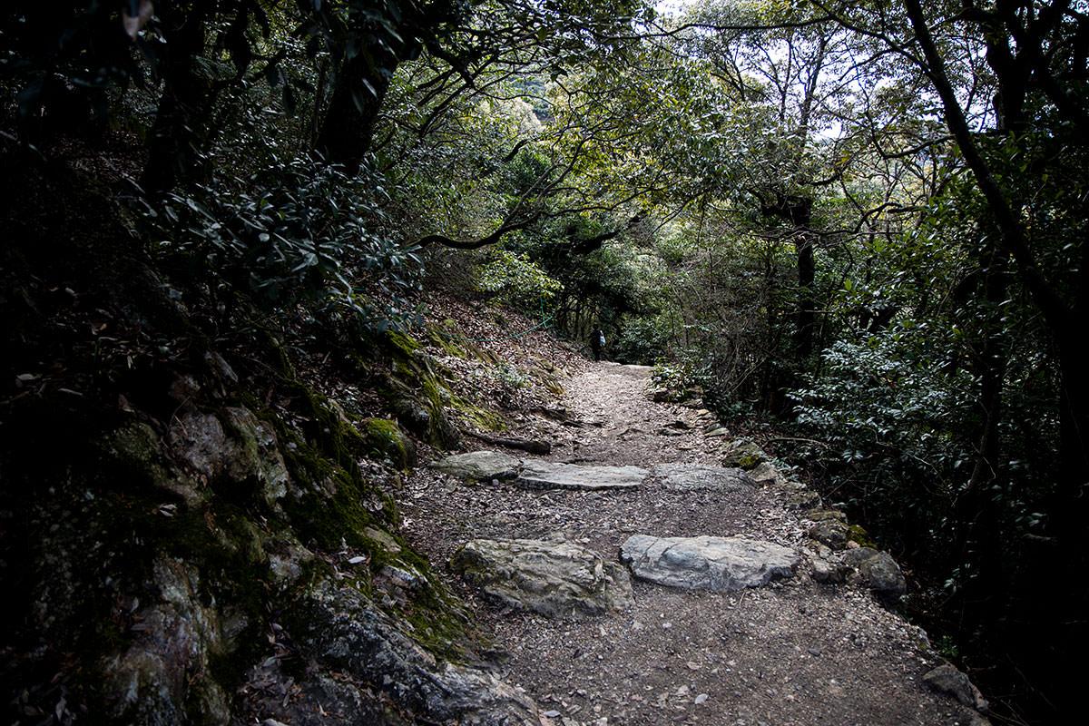 金華山-分岐を過ぎると安心感が出る感じ