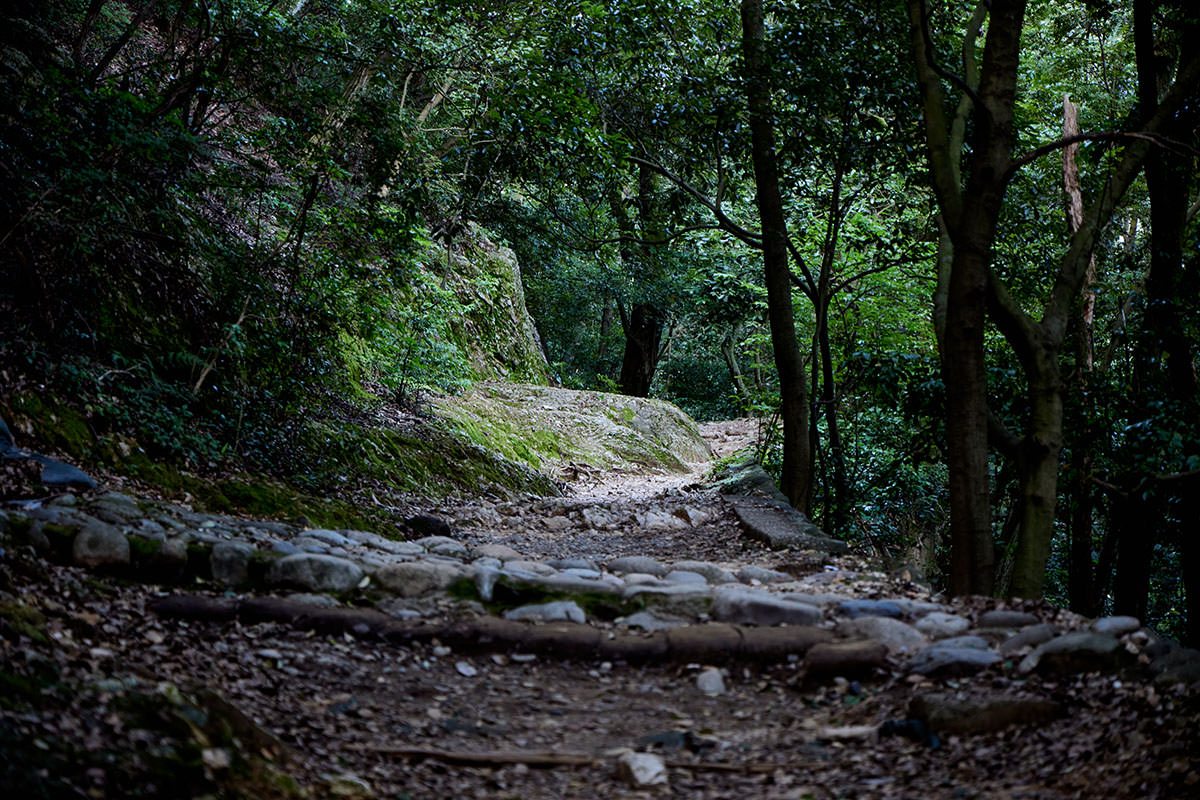 金華山-登りはなだらか