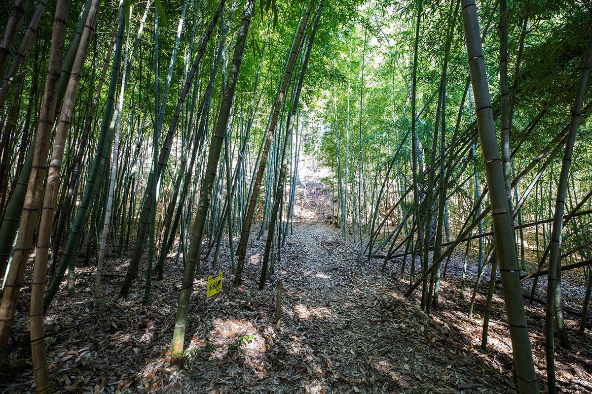 【子檀嶺岳 当郷管社コース】登山百景-竹に囲まれる