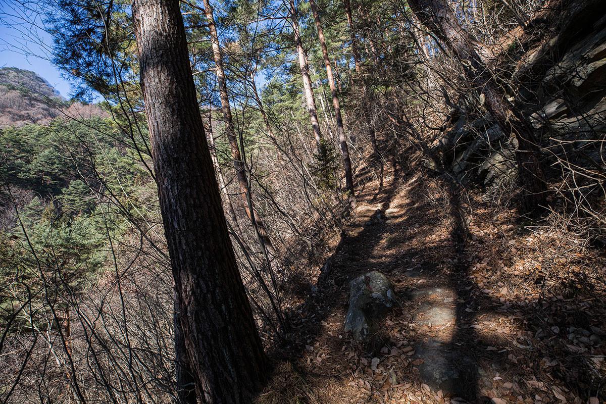 【子檀嶺岳 当郷管社コース】登山百景-歩きやすい登り坂が続く