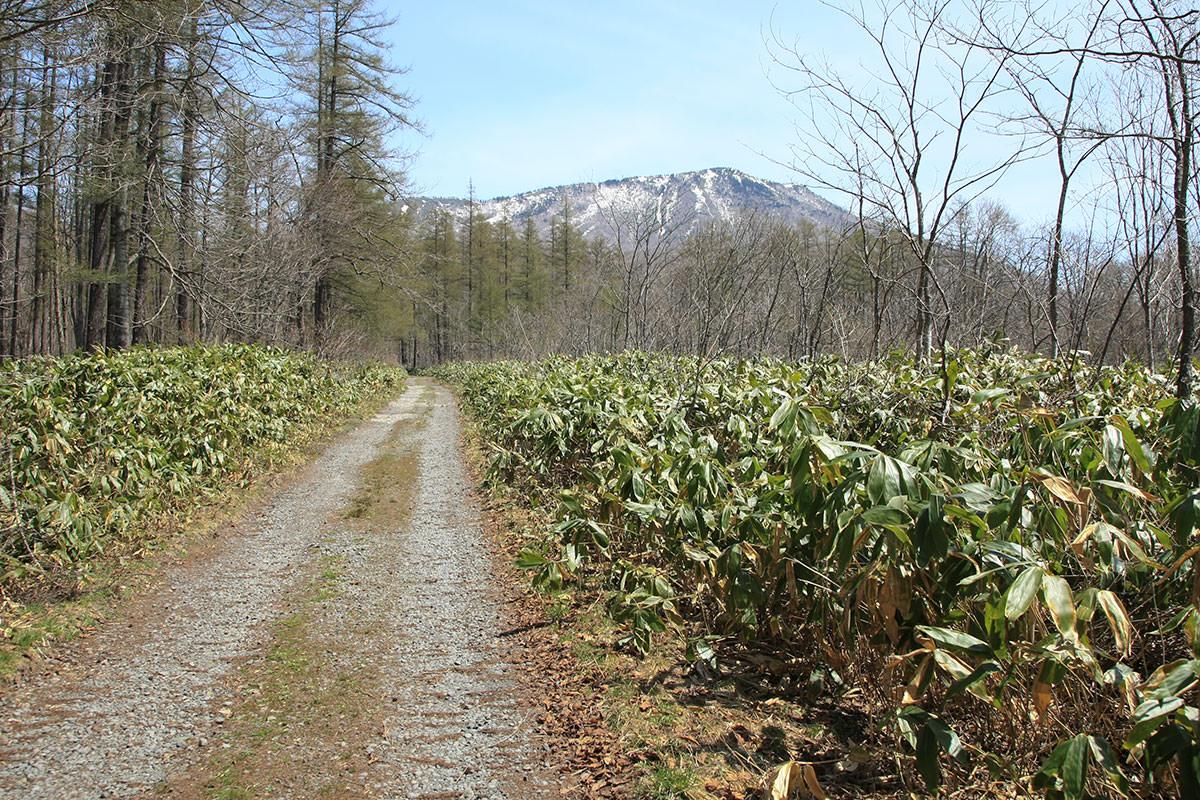 【黒姫山 西新道】登山百景-向こうに目指す山頂