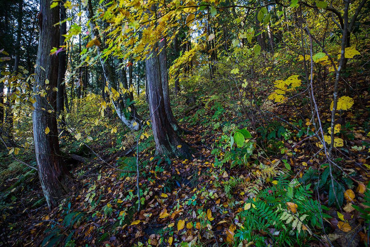 【黒姫山】登山百景-登山道がどこか分からないほど葉っぱ