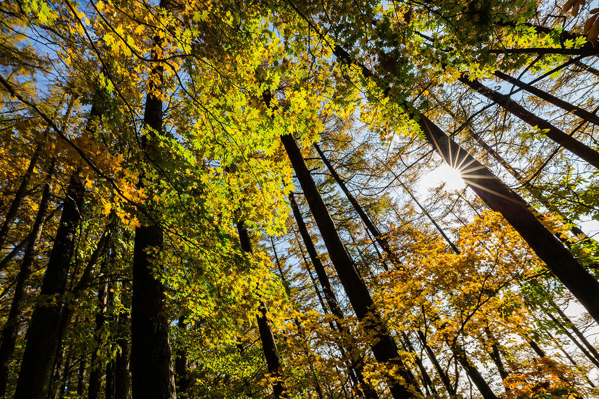 【黒姫山】登山百景-紅葉を見上げる