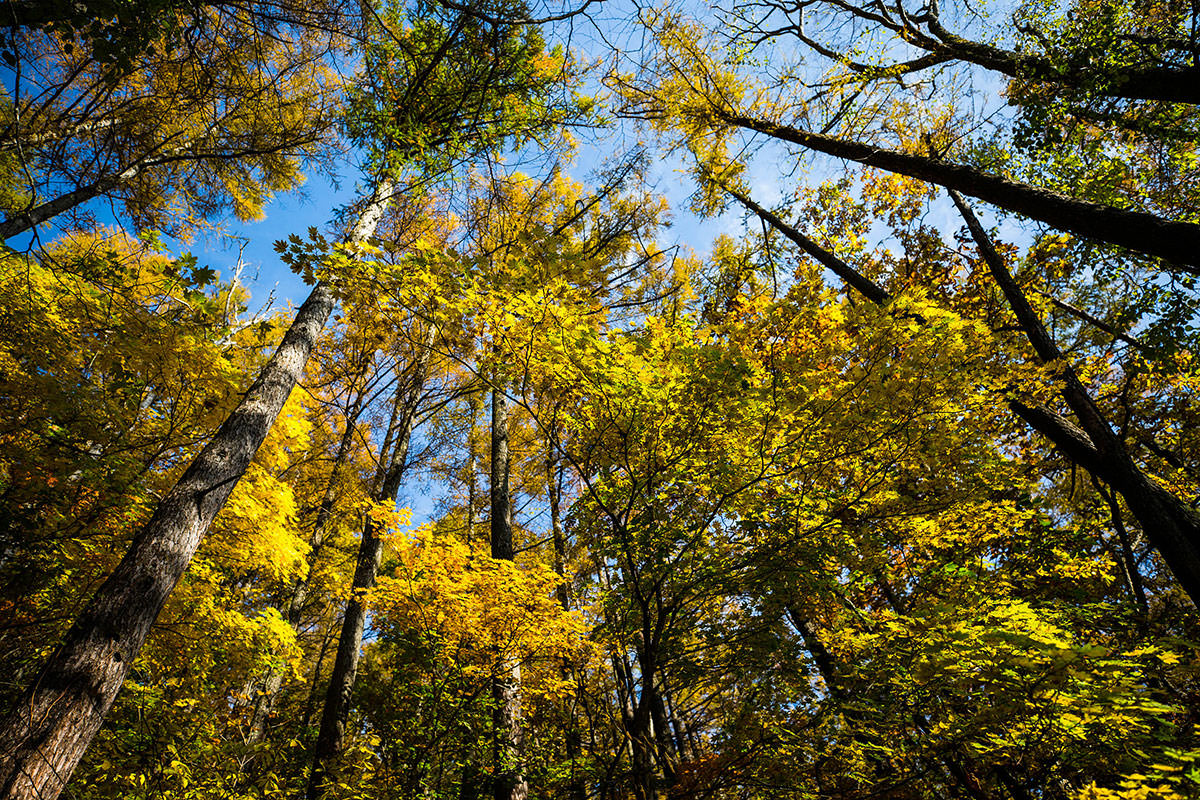 【黒姫山】登山百景-散った葉も多い