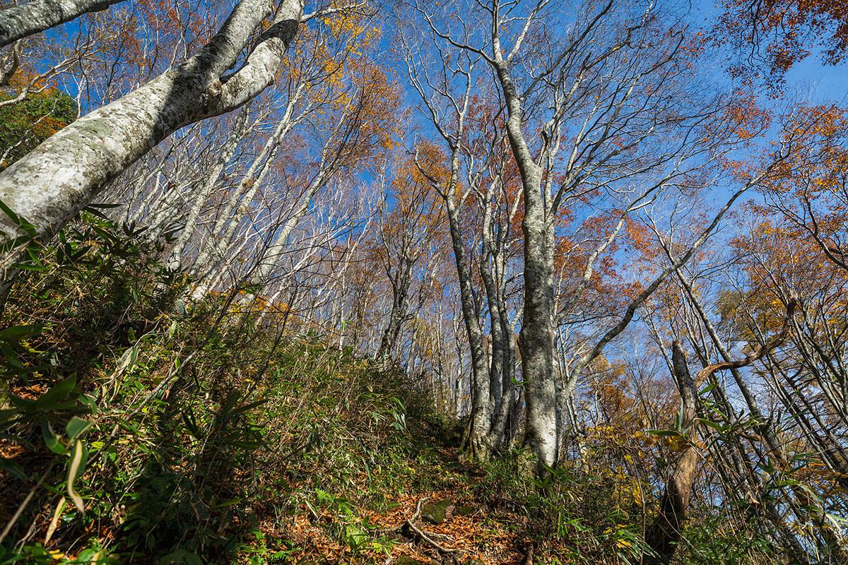 【黒姫山】登山百景-かなり葉が落ちている