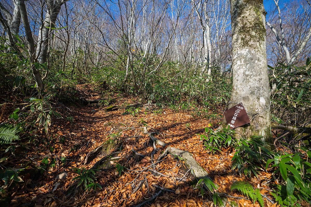 【黒姫山】登山百景-六合目のブナ林帯