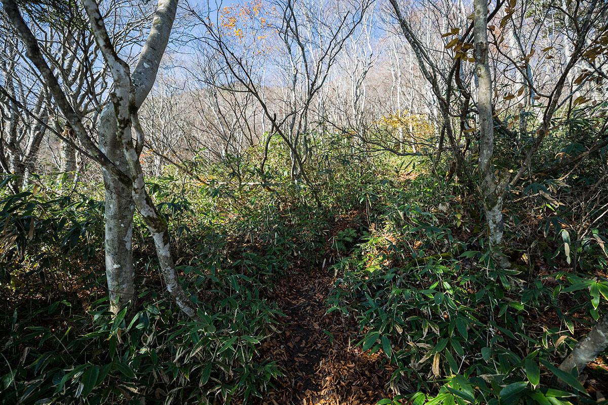 【黒姫山】登山百景-笹が目立つようになってきた
