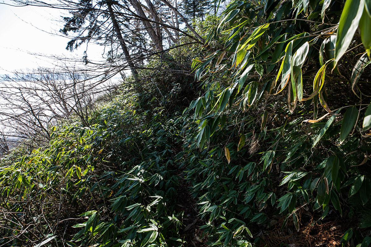 【黒姫山】登山百景-登山道を覆うほどの笹