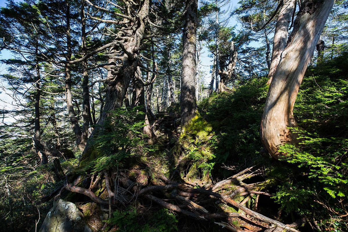 【黒姫山】登山百景-木がいっぱい