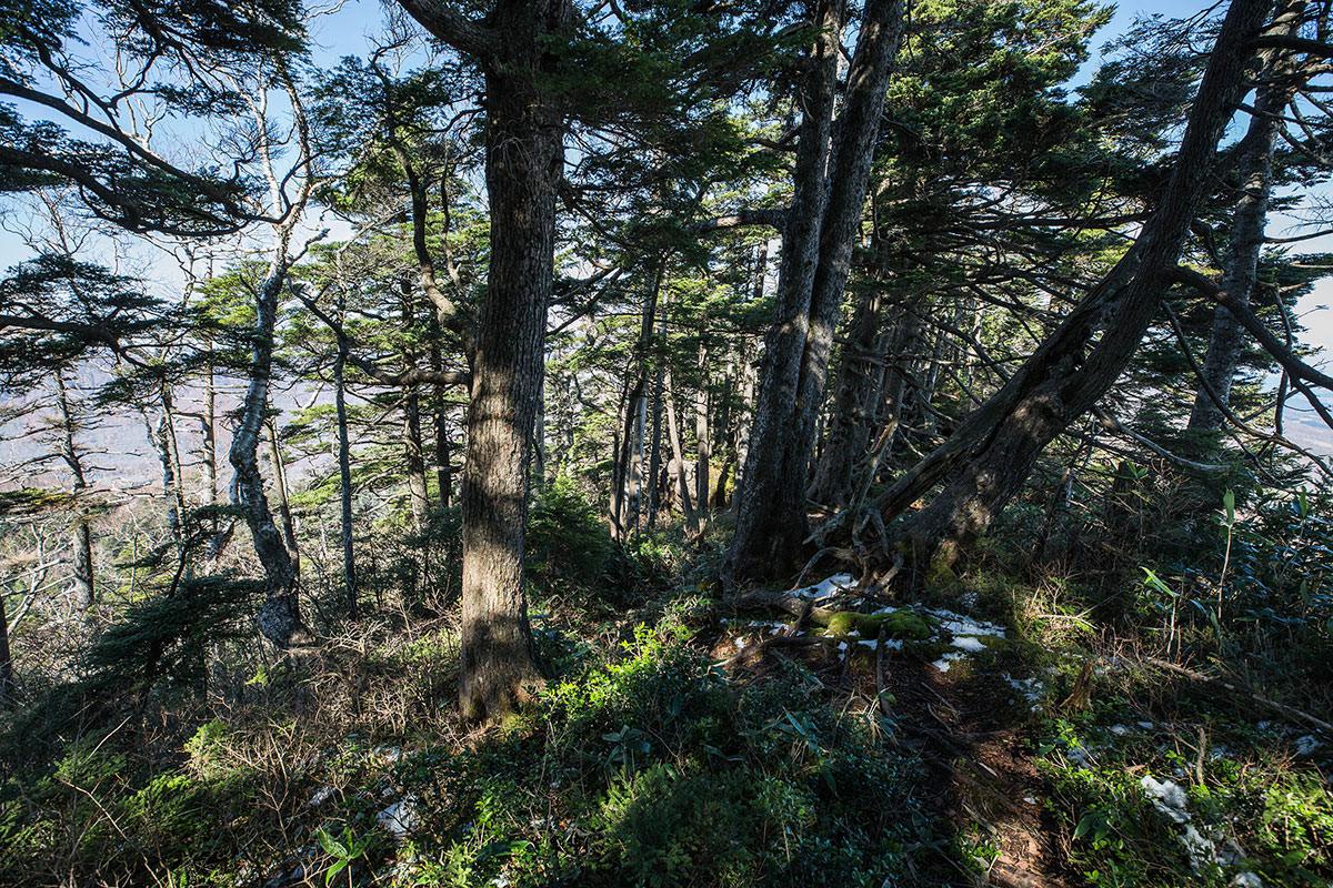 【黒姫山】登山百景-木を避けながら下りていく