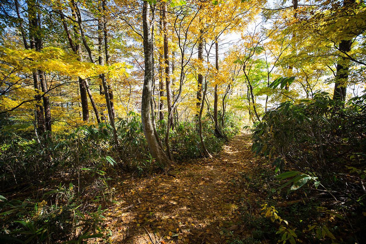 【黒姫山】登山百景-紅葉の中を歩く