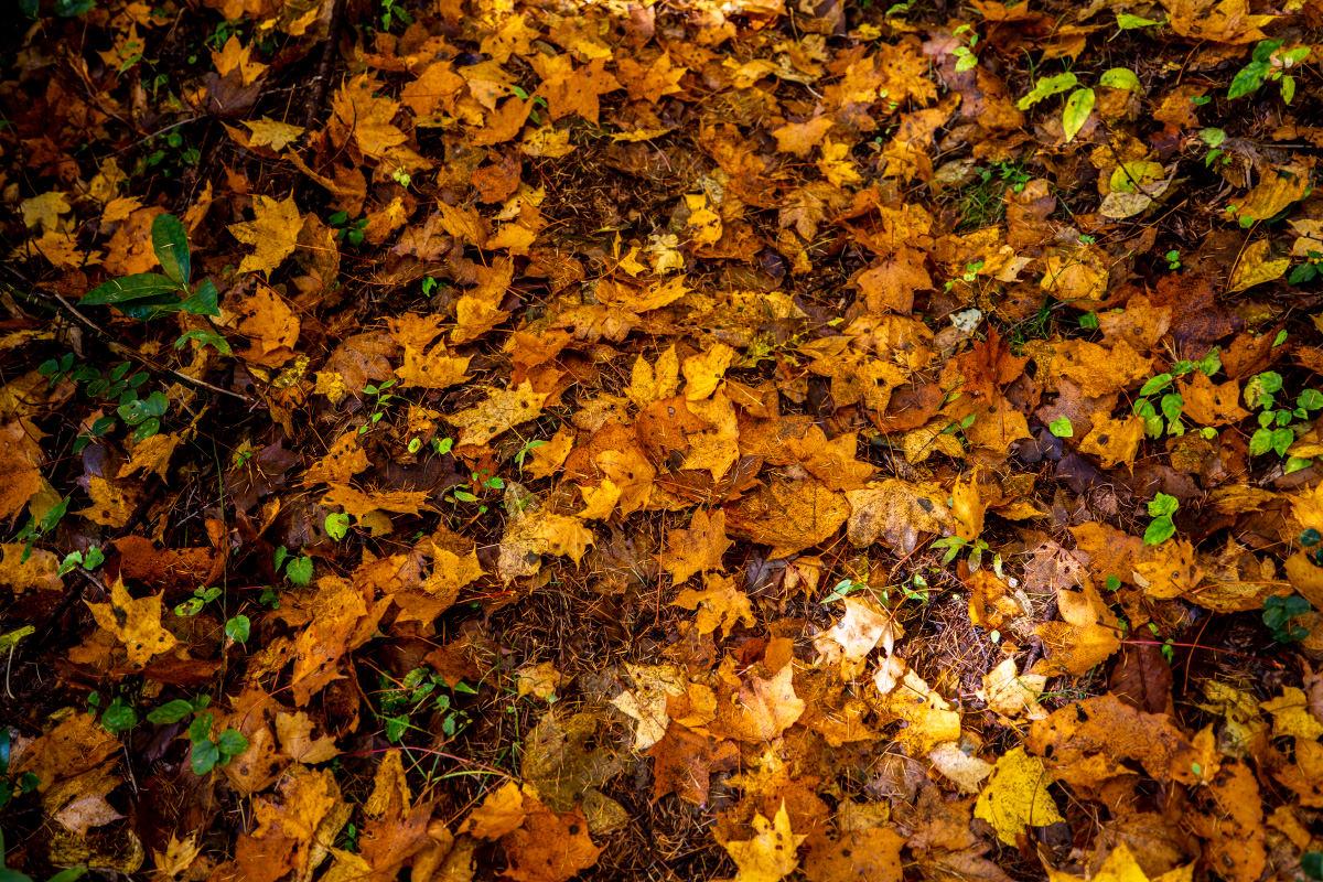 黒姫山で見る紅葉