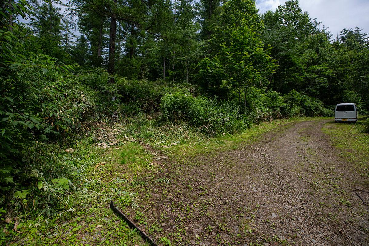 左の藪が登山道
