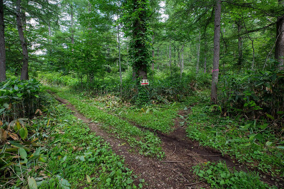林道を縫って直登していく感じ