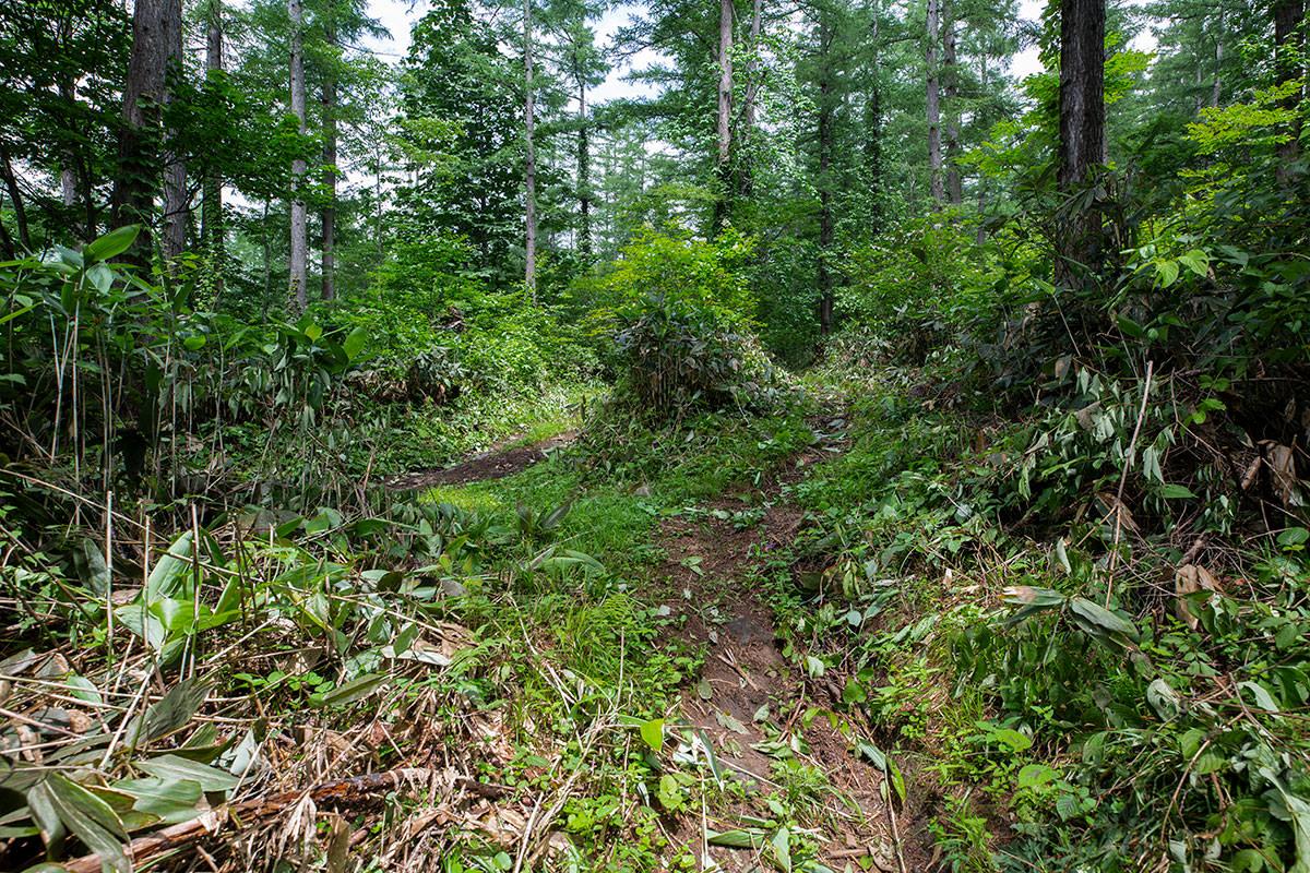 左が林道で右が登山道