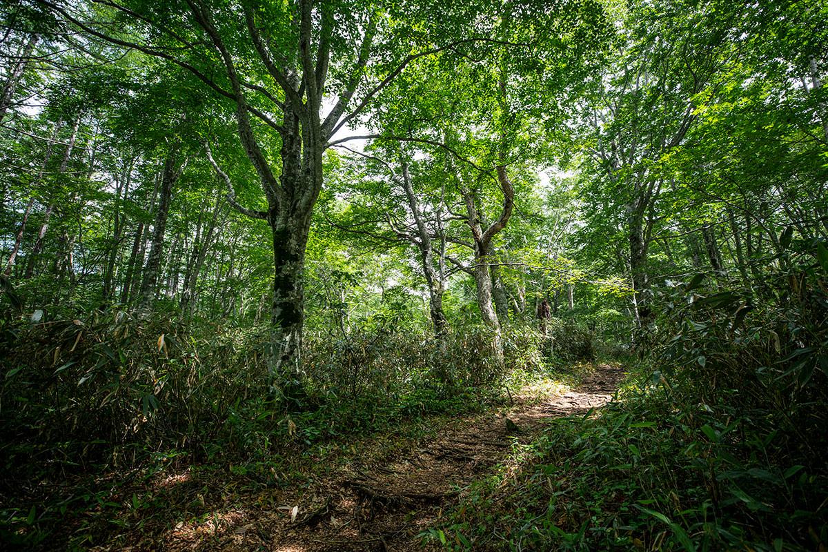 緑の中の緩い登り坂