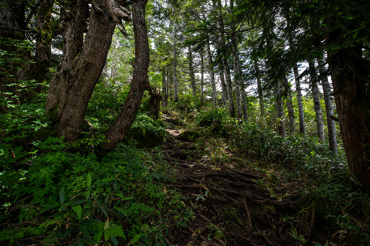 稜線は木に覆われてる