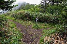 西新道と西登山道の分岐から右へ