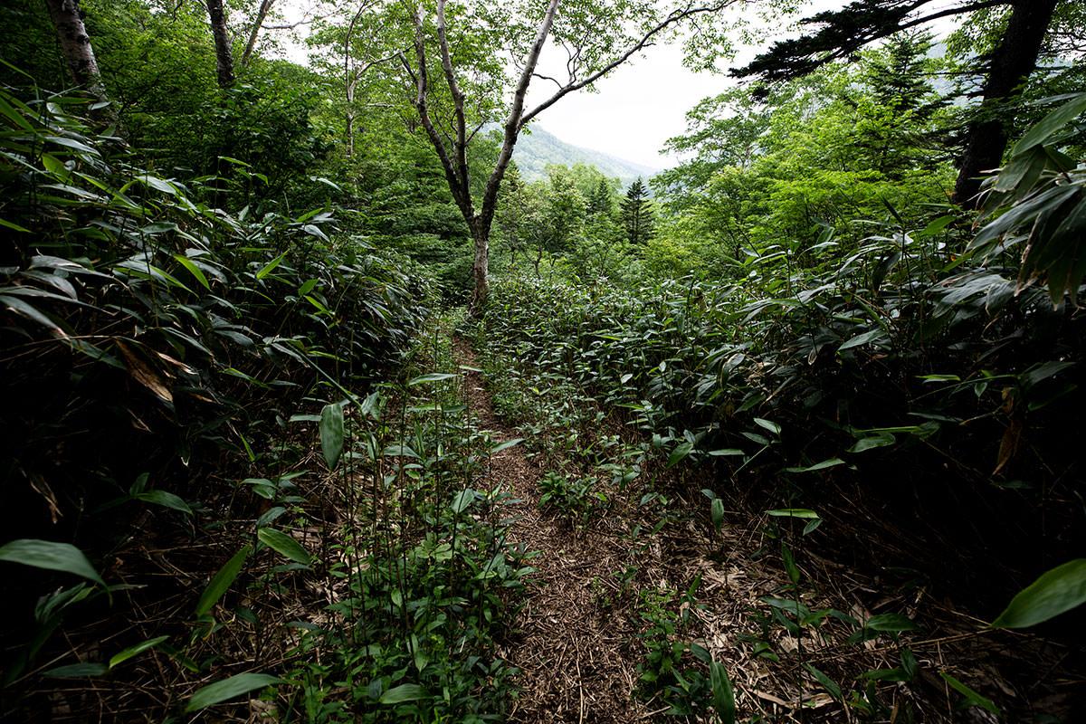 西登山道を下りていく