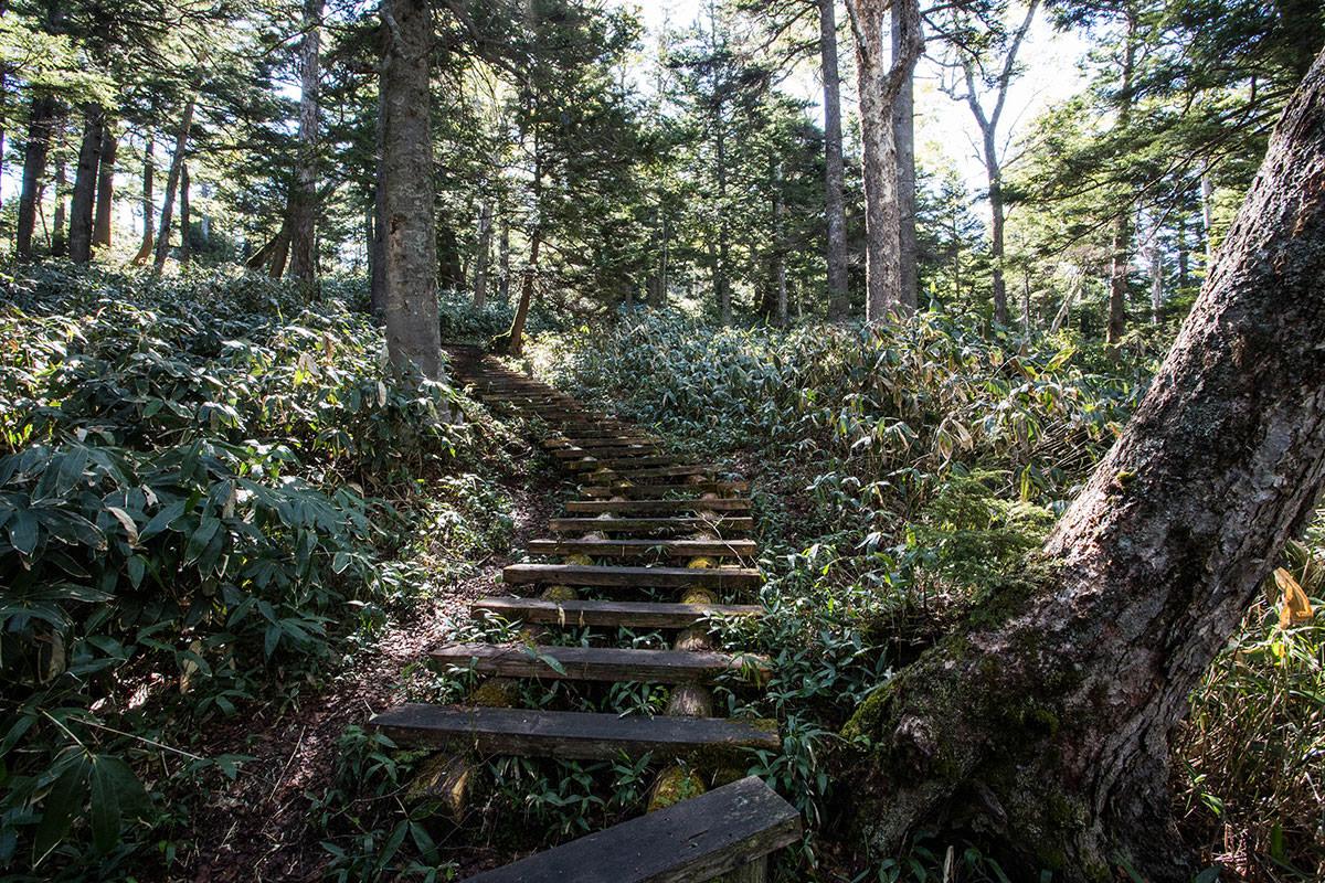 【本白根山 万座温泉】登山百景-木段もアチコチに