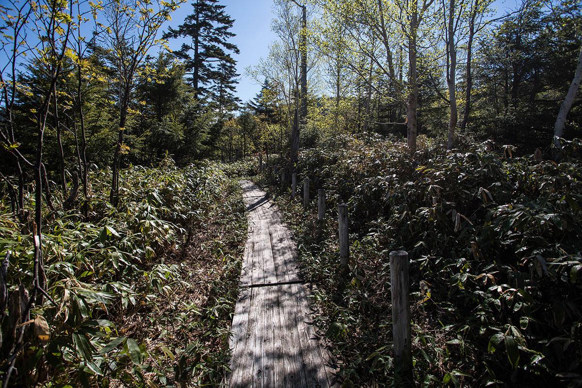 【本白根山 万座温泉】登山百景-木道を進む