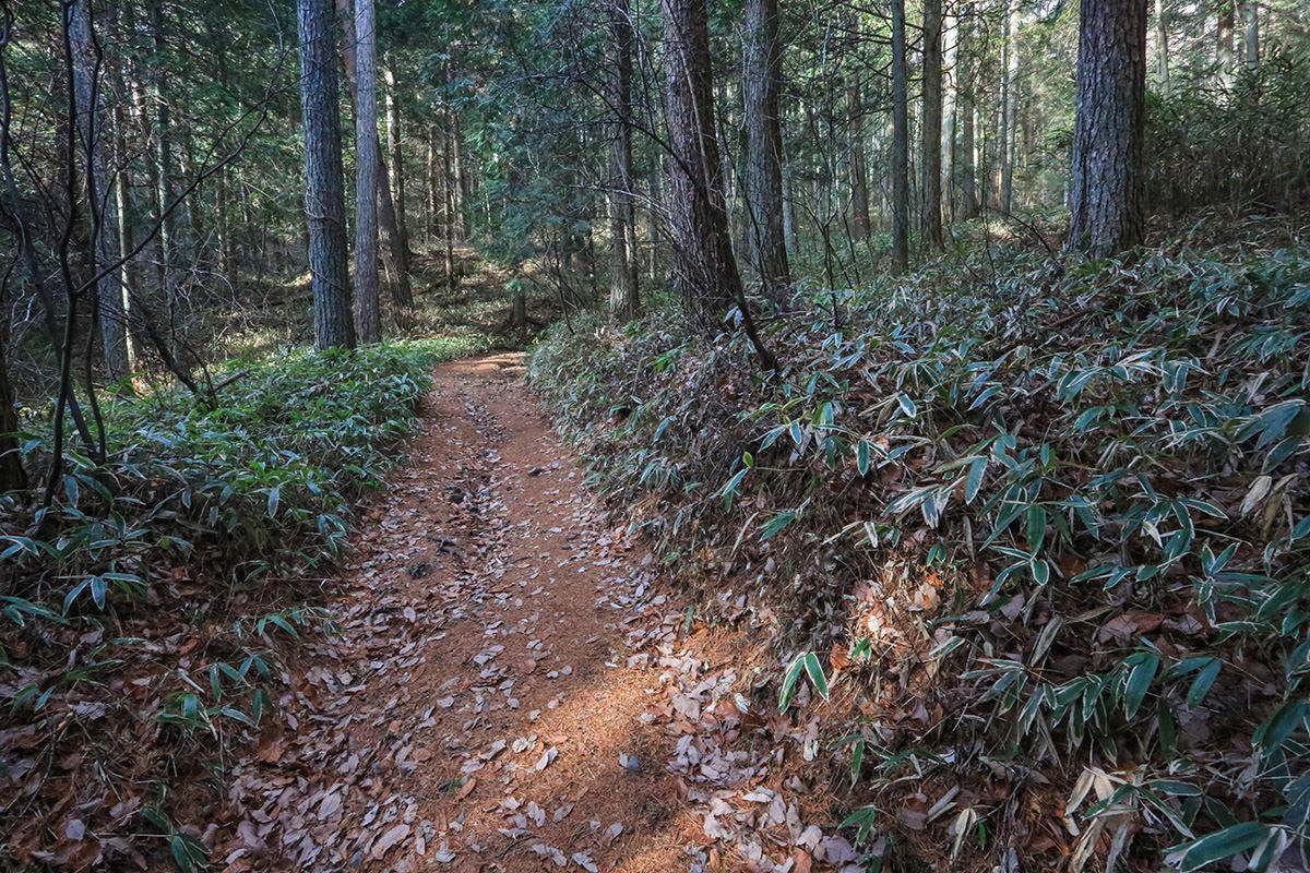 フカフカの登山道
