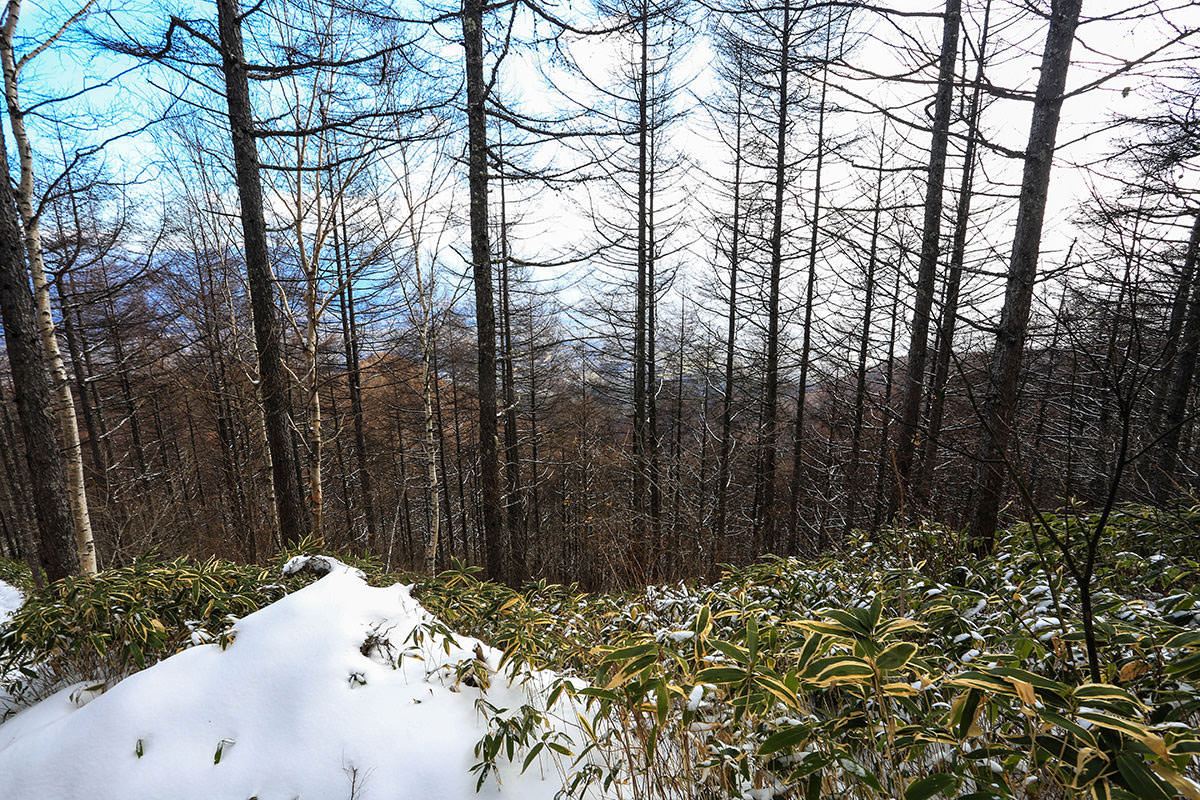 【経ヶ岳】登山百景-下に伊那の街