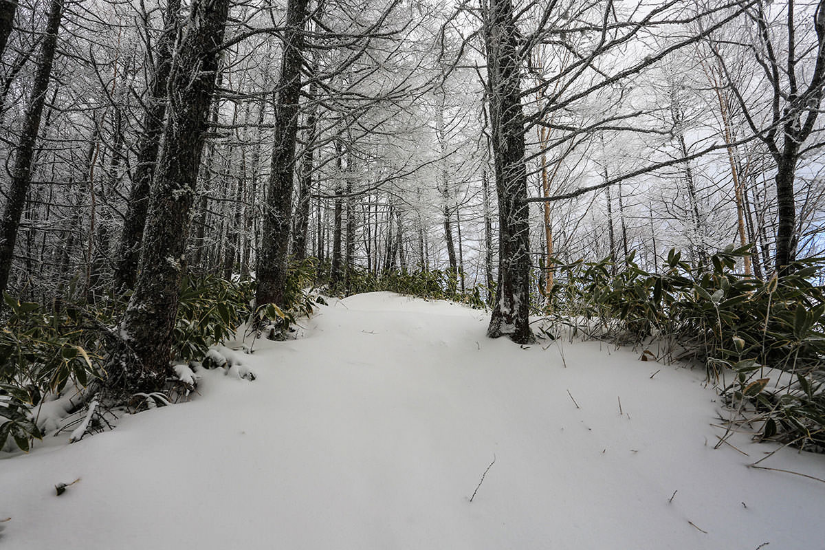 霧氷の急登