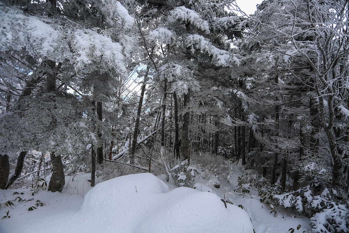 木が凍ってる