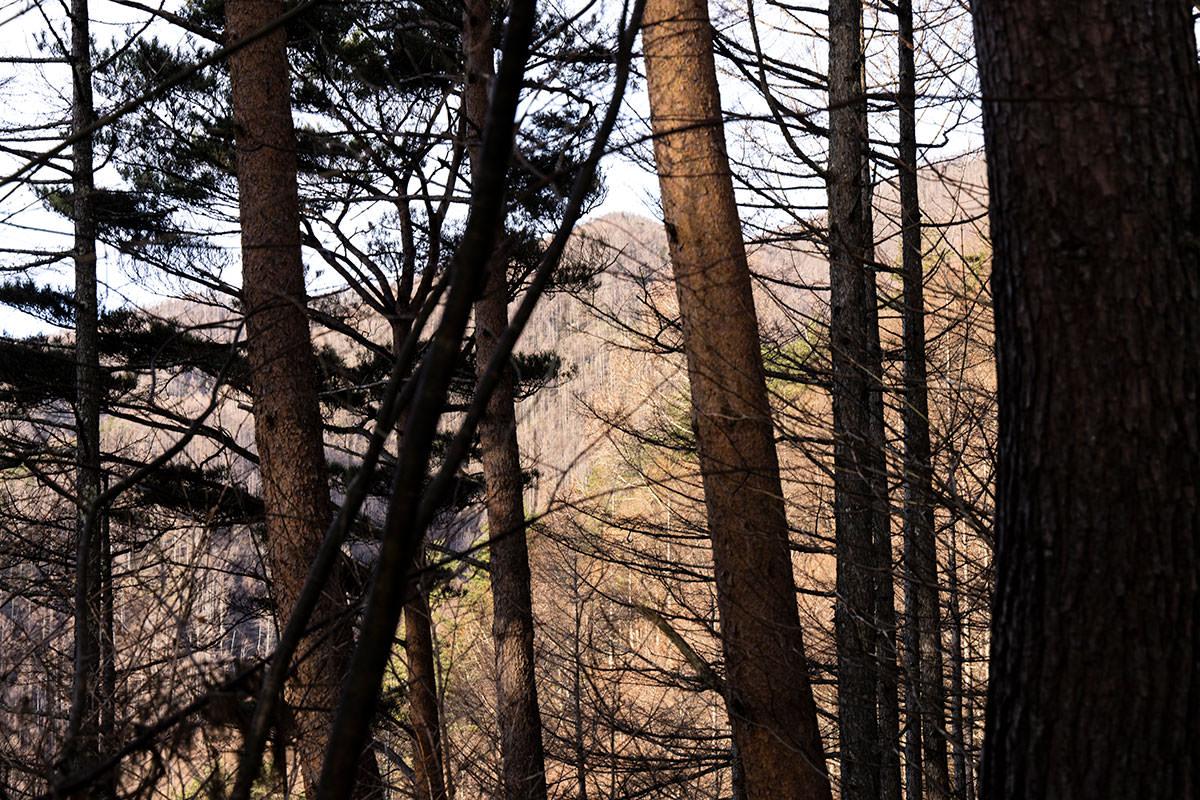 木の向こうに7合目が見える
