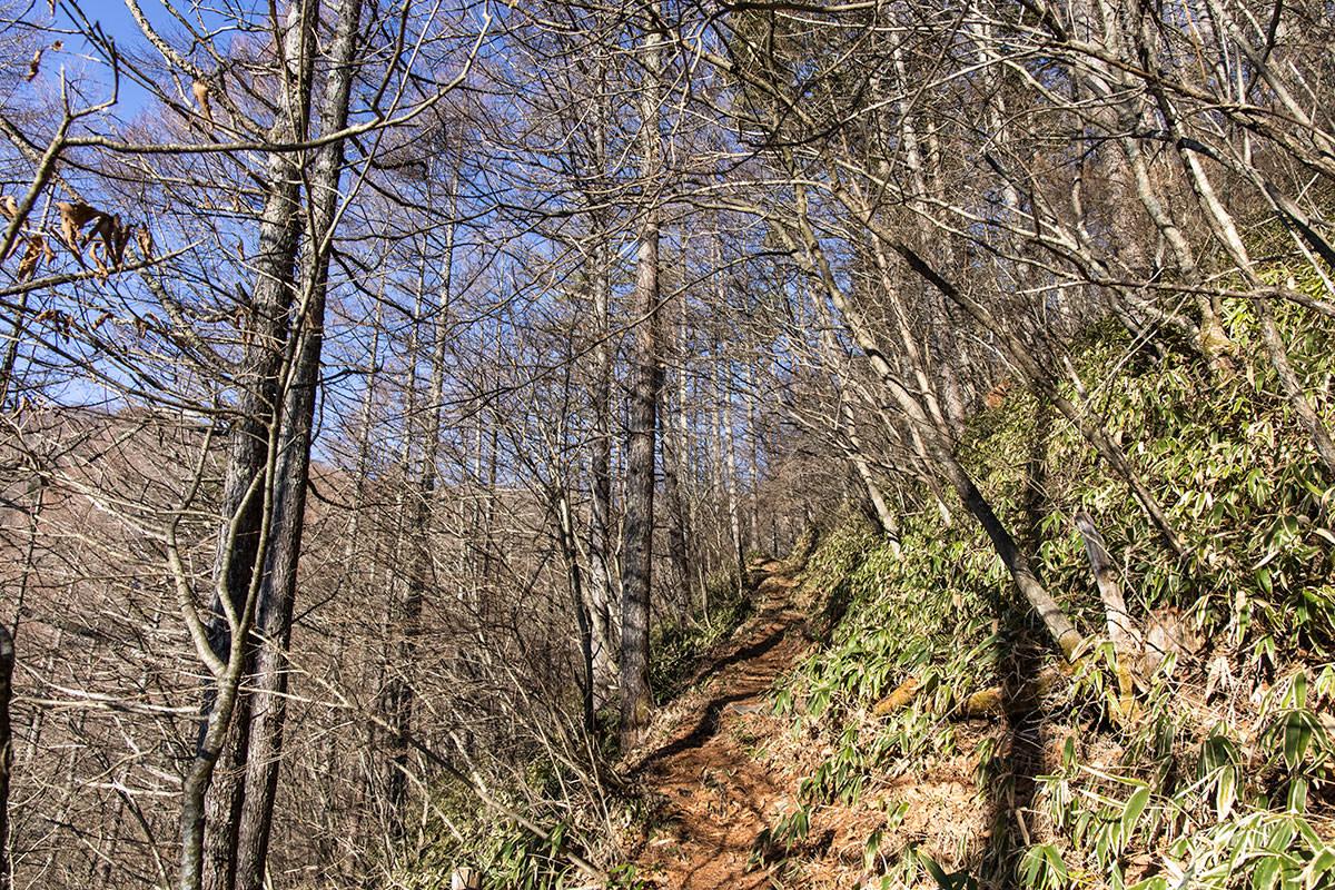 5合目からも樹林帯を登っていく